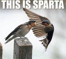 Get thee behind me, adversity!